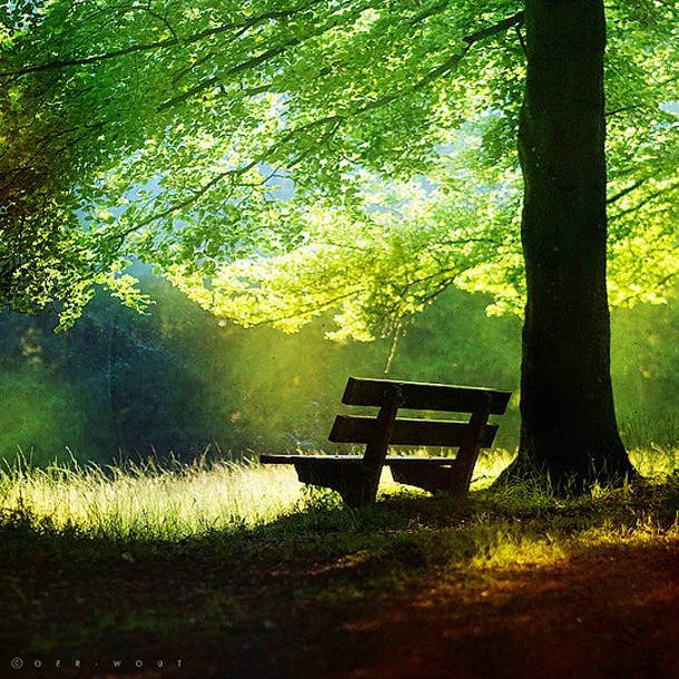 036-stunning-photography-oerwout.jpg