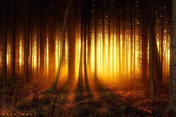 051-stunning-photography-oerwout.jpg