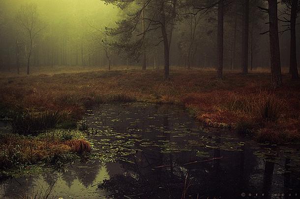 052-stunning-photography-oerwout.jpg