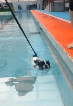 firstswim4.jpg