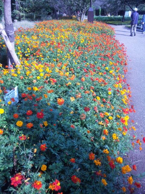 *オレンジの花*