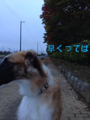 fc2blog_20141028080737573.jpg