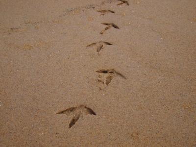 カモメ足跡