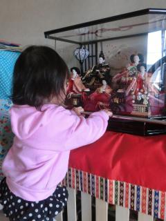 雛人形に興味津々