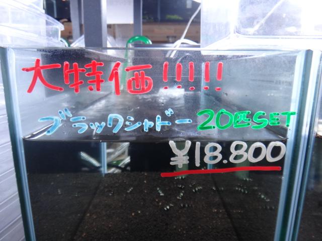 DSC04656_20121216144046.jpg