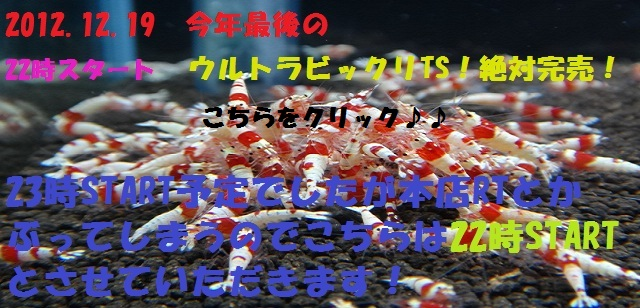 DSC07455_20121217125901_20121218164035.jpg