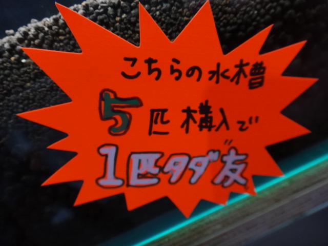 DSC09638.jpg