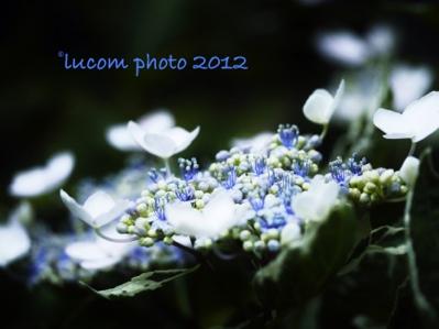 fc2blog_20120624193224510.jpg