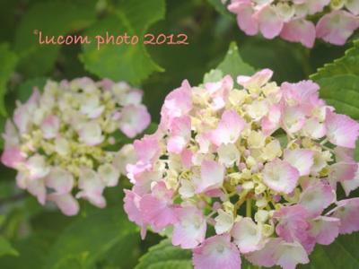 fc2blog_20120624213119e61.jpg