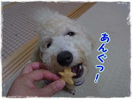 クッキーコテ