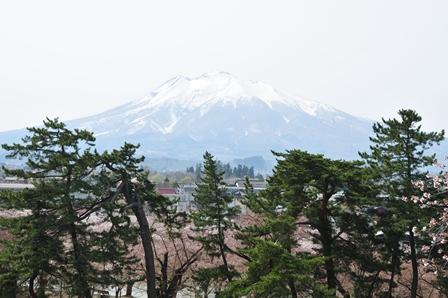 本丸から岩木山と松の木