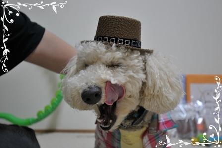 コテ帽子1