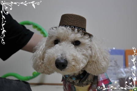 コテ帽子2