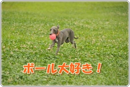 ボール大好きぺねちゃん