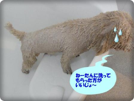 ねーたんに洗ってもらいたい