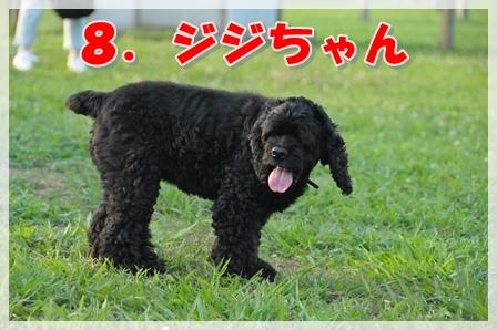 8.ジジちゃん