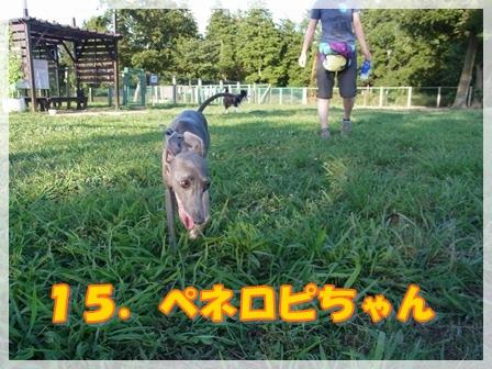 15.ペネロピちゃん