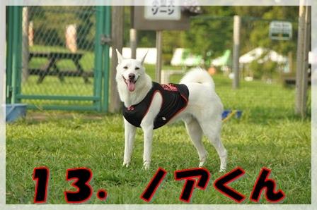 13.ノアくん