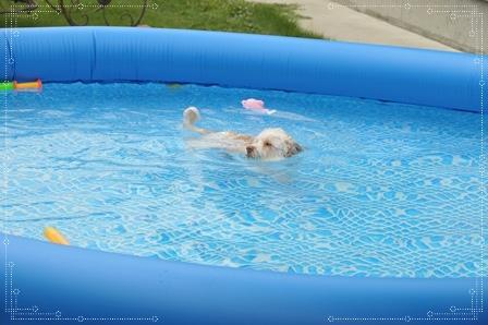 泳ぐワンコ