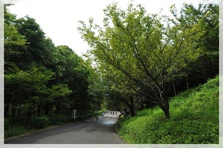 公園風景2