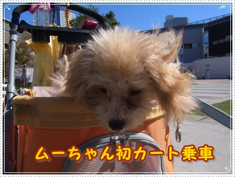 ムーちゃん初カート乗車
