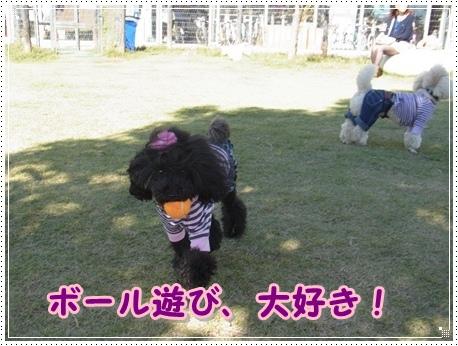 ルナボール遊び