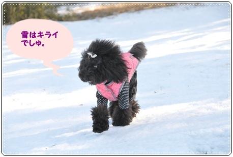 雪きらい ルナ
