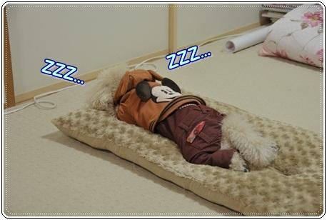 ひたすら寝る小鉄