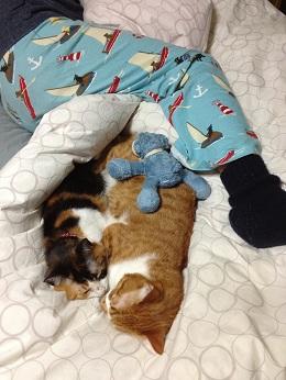 松崎さんと猫ズ