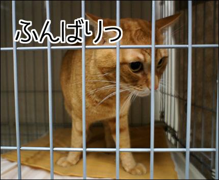 cat140.jpg