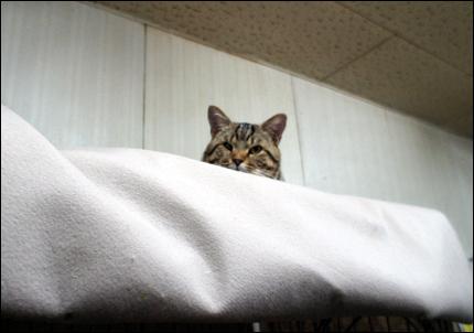 cat143.jpg