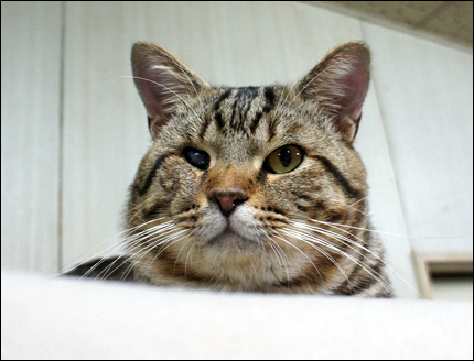 cat145.jpg