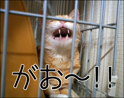 cat146.jpg