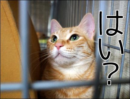 cat147.jpg