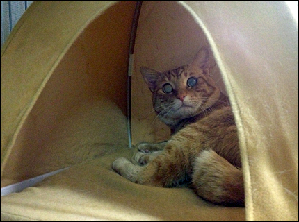 cat148.jpg