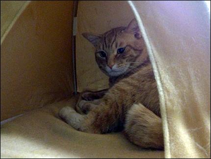 cat149.jpg
