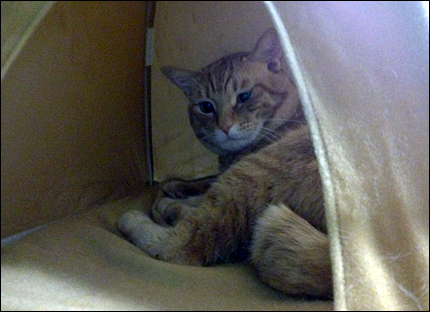 cat150.jpg