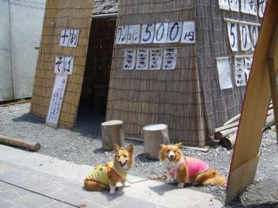 3.修善寺5