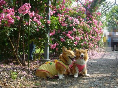 2日平成の森公園14