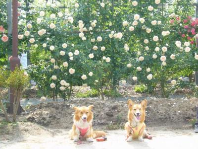 2日平成の森公園15