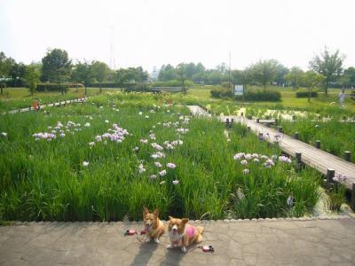2日平成の森公園18
