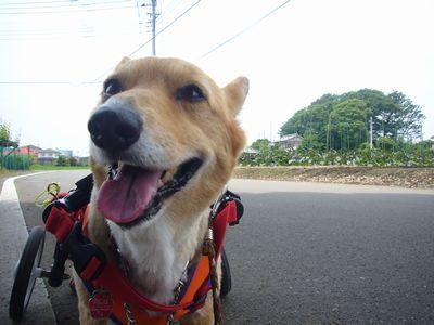 15日朝散歩1
