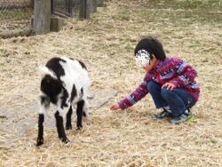 【子供と遊ぶ】 無料スポット秩父高原牧場(彩の国ふれあい牧場)無料で動物と遊ぶ