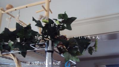 DSC06893_convert_20120526002545.jpg