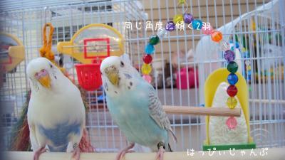 DSC07378_convert_20120602101744.jpg