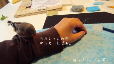 DSC07422_convert_20120604113244.jpg
