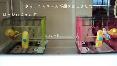 DSC08884_convert_20120709094726.jpg