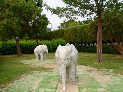 象がでたゾウ!