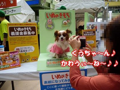 表紙撮影 クッキー②
