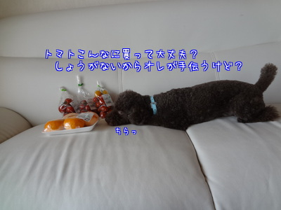 XPN98hLIO9btIf0.jpg